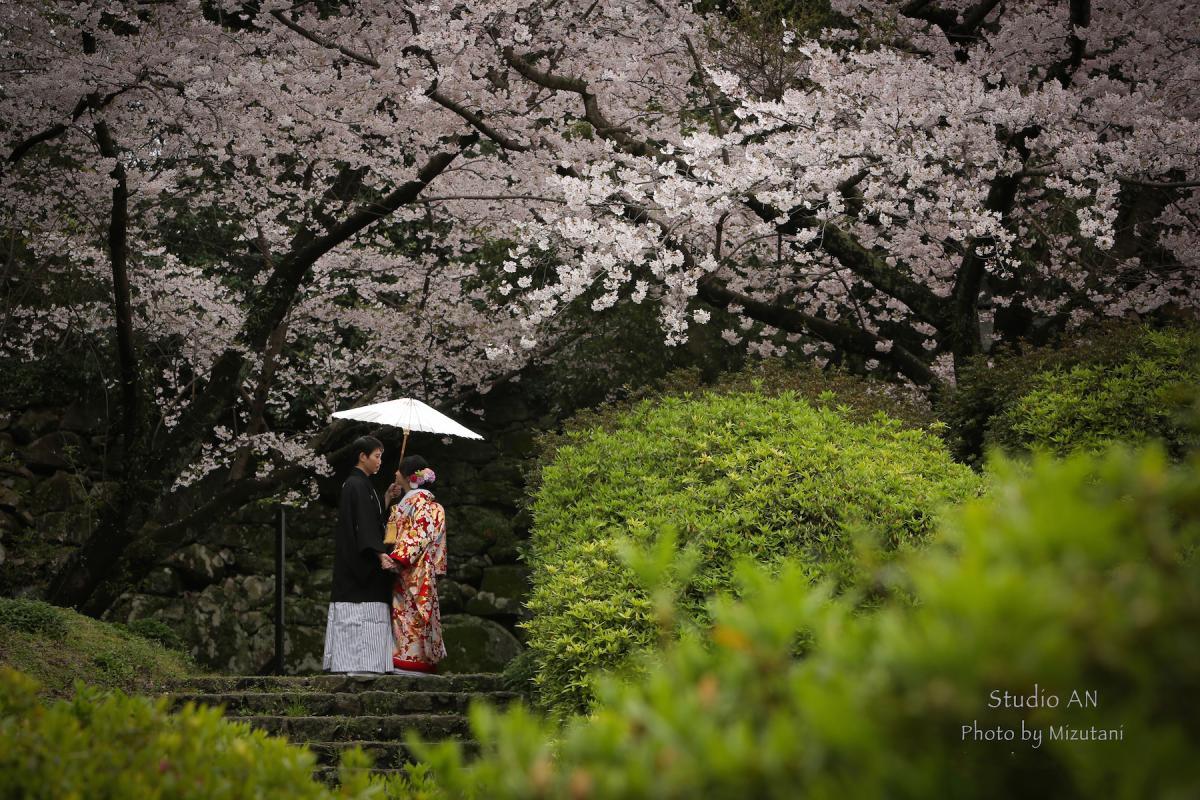 和装ロケーション 桜